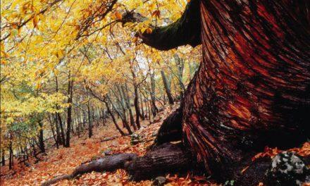 Valle del Ambroz, bosque para el otoño