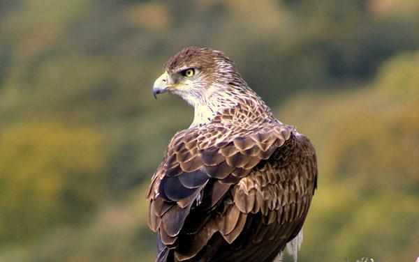 Aves del Bosque y Matorral Mediterráneos